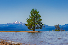 Almanor_Lake-7508